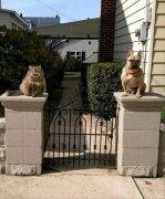 搞笑的猫咪门神石雕像图片