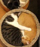 猫咪睡觉的搞笑图片