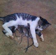 猫咪跟老鼠玩耍的搞笑图片