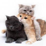 可爱搞怪的叠猫猫高清图片