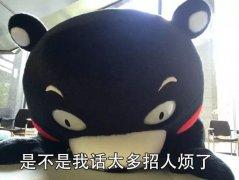 熊本熊社交日常表情包图片