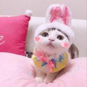 可爱萌宠小猫咪头像图片