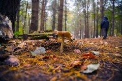 森林中的野生蘑菇花卉壁纸