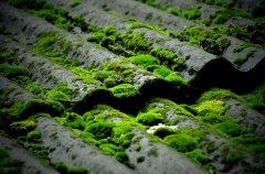 瓦上的苔藓花卉壁纸
