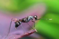 勤劳的小蚂蚁动物壁纸