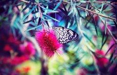 停留在花上的蝴蝶�游锉诩�
