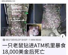 最值钱的老鼠