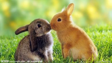 动物之间的恋爱