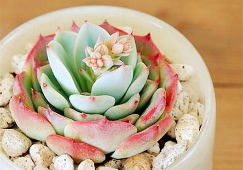 清新漂亮的多肉植物
