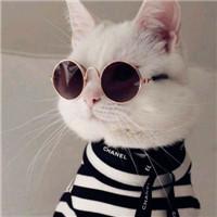 可爱萌猫ins头像_超好看的萌猫咪