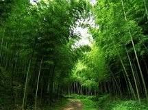 唯美古风竹林风景