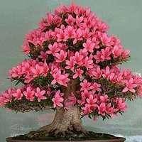 花卉 适合做头像植物花卉