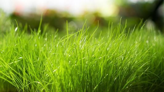 绿色护眼清新植物,