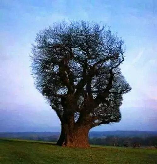 长得像人头一样的树