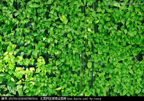 �G色植物��