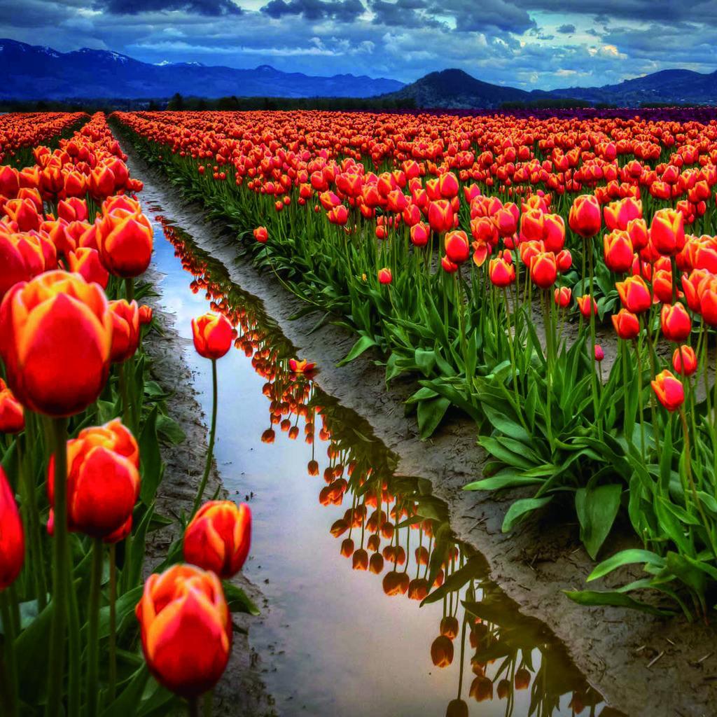植物风景,万花从中过
