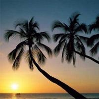 超好看的夕阳写景