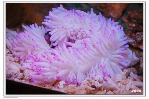美��的海洋植物