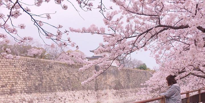 盛开的樱花树