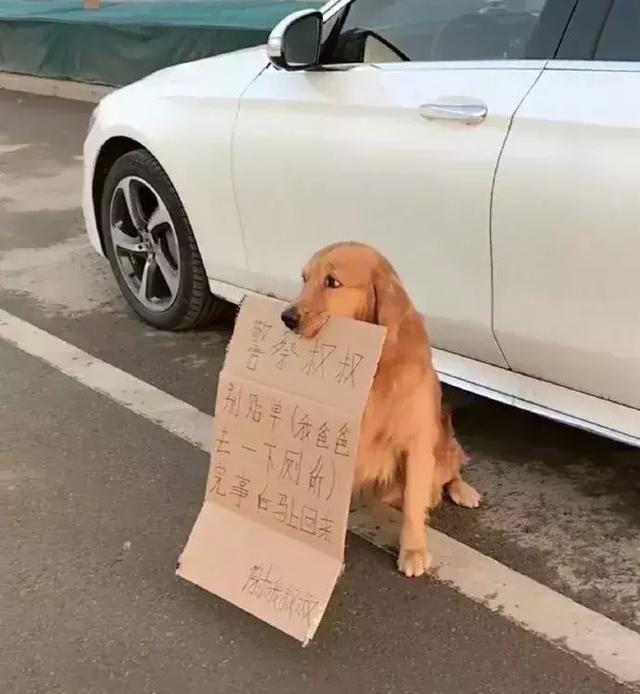 真的是养狗千日,用狗一时