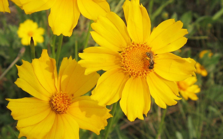 美��的菊花