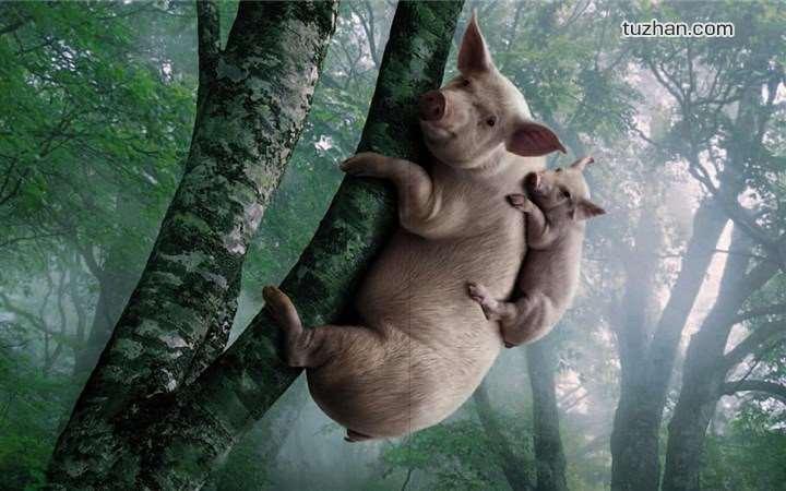 这年头猪会上树你信吗