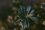 绿色植物叶片