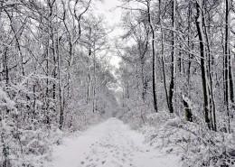 大雪屋盖的树木图片