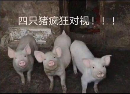 四只�i(zhu)��狂的(de)�σ�(shi)