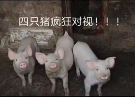 四(si)只�i(zhu)��狂的�σ�(shi)