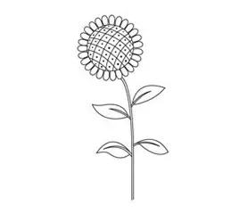 怎么画葵花