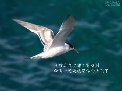 ��(dang)bei)澈笞笥�~���]新肥保 艘�g(huan)ㄊ��gu)�钅阆蛏�xi)fei)了。