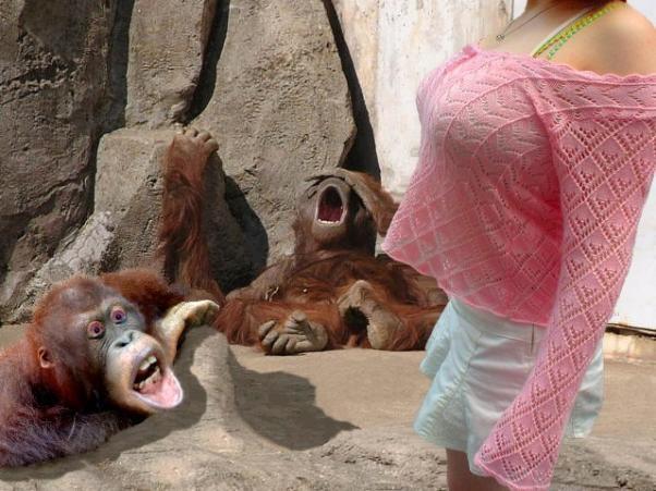 当猩猩看到奶子的时
