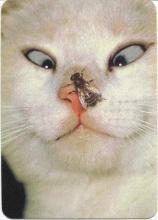 鼻子上有蚊子