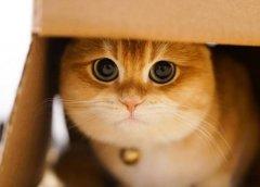 大眼萌猫!